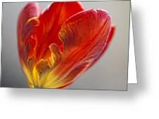 Parrot Tulip 9 Greeting Card