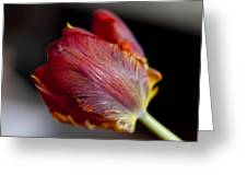Parrot Tulips 13 Greeting Card