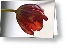 Parrot Tulips 14 Greeting Card by Robert Ullmann