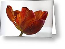 Parrot Tulips 20 Greeting Card