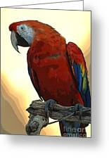 Parrot Watching Greeting Card