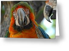 Parroting Information Greeting Card