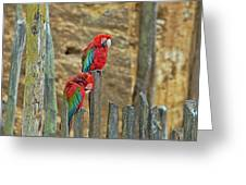 Parrots, Doue-la-fontaine Zoo, Loire, France Greeting Card