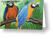 Parrots In Light And Shade Greeting Card