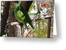 Parrots. Greeting Card