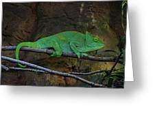 Parson's Chameleon Greeting Card