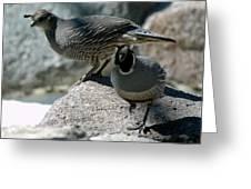 Partridge Pair Reno Nv Greeting Card