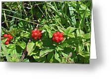 Partridgeberries Greeting Card