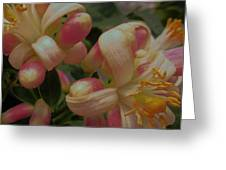 Party Blooms Greeting Card
