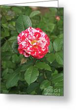 Party Rose #3 Greeting Card