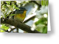 Parula In A Pear Tree Greeting Card