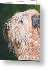 Pascal, Soft Coated Wheaten Terrier Greeting Card