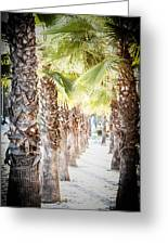 Pass Of Palms Greeting Card