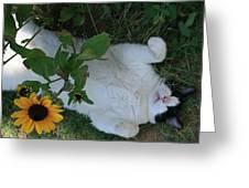 Passed Out Under The Daisies Greeting Card