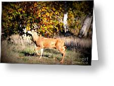 Passing Buck In Autumn Field Greeting Card