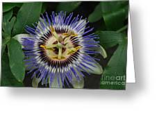 Passion Bloom Vi Greeting Card