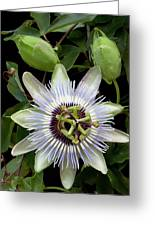 Passion Flower 1 Greeting Card