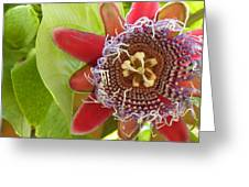 Passion Flower-1 Greeting Card