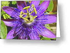 Passion Flower 2 Greeting Card