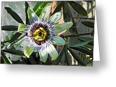 Passion Flower Close-up Greeting Card