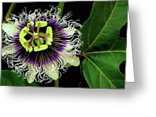 Passion Flower Greeting Card