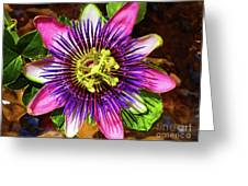 Passion Flower Greeting Card by Mariola Bitner