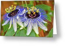 Passion Flower Power Greeting Card