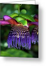 Passion Flower Ver. 10 Greeting Card