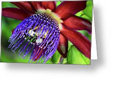 Passion Flower Ver. 11 Greeting Card