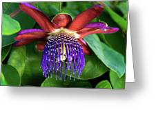 Passion Flower Ver. 13 Greeting Card