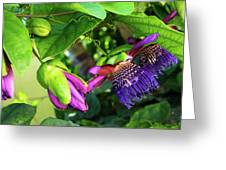 Passion Flower Ver. 14 Greeting Card