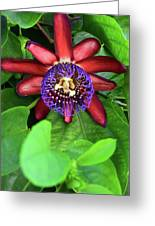 Passion Flower Ver. 15 Greeting Card