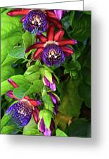 Passion Flower Ver. 16 Greeting Card