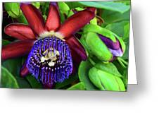 Passion Flower Ver. 17 Greeting Card