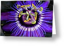 Passion Flower Ver. 4 Greeting Card