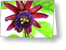 Passion Flower Ver. 5 Greeting Card