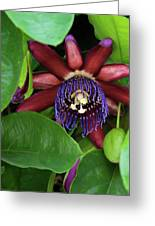 Passion Flower Ver. 8 Greeting Card