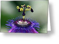 Passion For Purple  Greeting Card