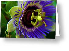 Passion-fruit Flower Greeting Card