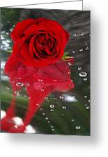 Passion In The Rain Greeting Card