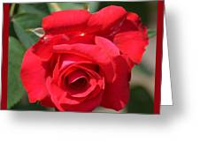 Passion Rose Greeting Card