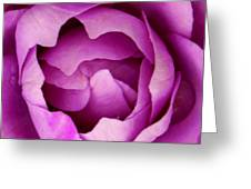 Passionate Purple Greeting Card