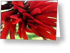 Passionate Red Greeting Card
