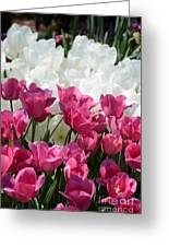 Passionate Tulips Greeting Card