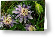 Passionflower And Companions Greeting Card by Karen Lawson