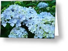 Pastel Blue Hydrangea Flowers Green Garden Floral Greeting Card