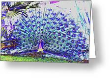 Pastel Peacock Greeting Card