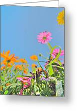 Pastel Poppies Greeting Card