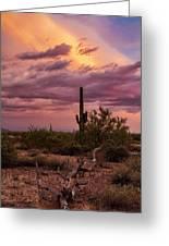 Pastel Sonoran Skies At Sunset  Greeting Card