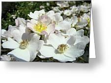 Pastel White Yellow Pink Roses Garden Art Prints Baslee Greeting Card